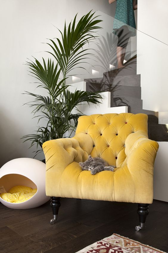 072217 beauty kween blog spoiled kittens